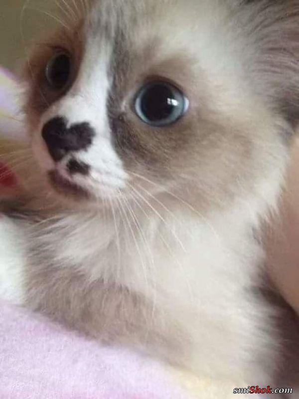 Эти котики такие милые что заставят вас улыбнутся (28 фото)