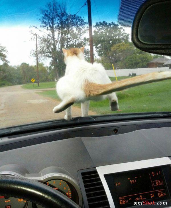 Коты всегда найдут место где примоститься, эти фото тому доказательство
