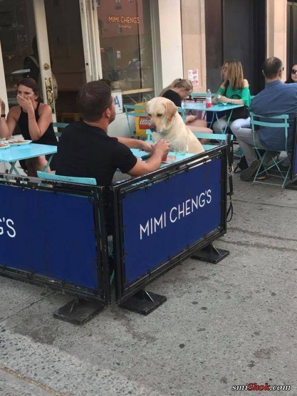 35 избалованных собак, жизни которых позавидуют многие