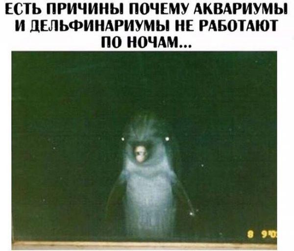 Смешные картинки с надписями вечерний выпуск (24 фото)