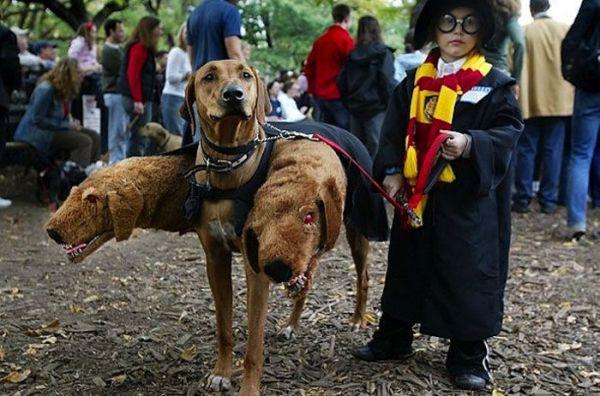 Прикольные фото про Хэллоуин (32 фото)