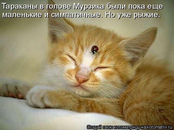 Без кота жизнь не та! Порция смешных котоматриц (21 фото)