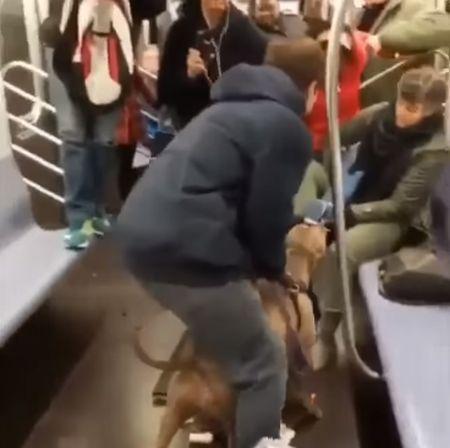 Питбуль разбушевался в метро