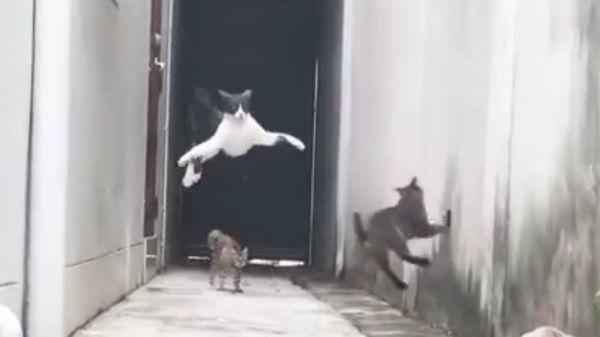 Паркур котов - Русские приколы с котами под музыку