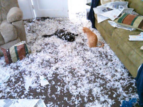 Домашние животные без присмотра, слетевшие с катушек