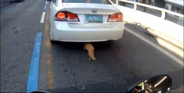 Кот под прикрытием