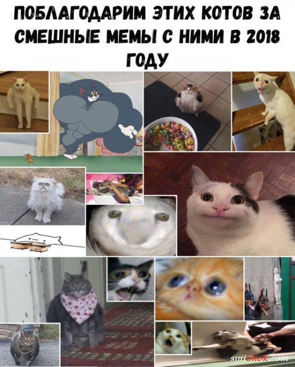 Смешные картинки с надписями от 2 января 2019