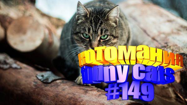 Видео про котов. Котомания # 149